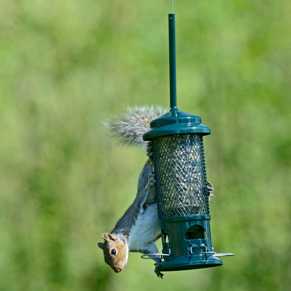 Image of Brome Squirrel Buster Seed Feeder