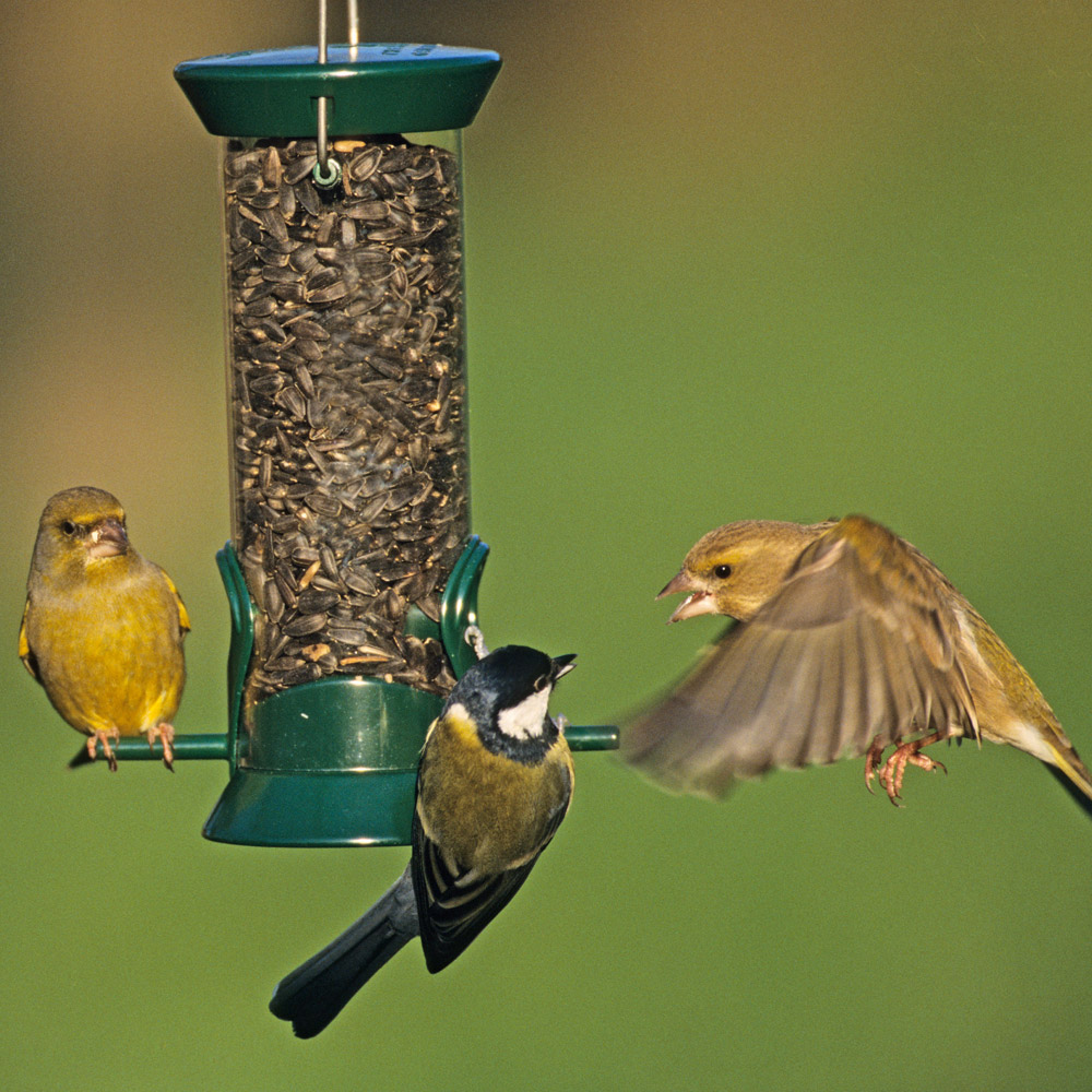 Image of Droll Yankees Small Lifetime Seed Feeder