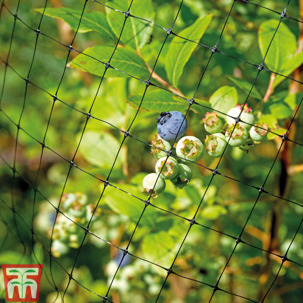 Image of Garden Netting (6 metres x 2 metres)
