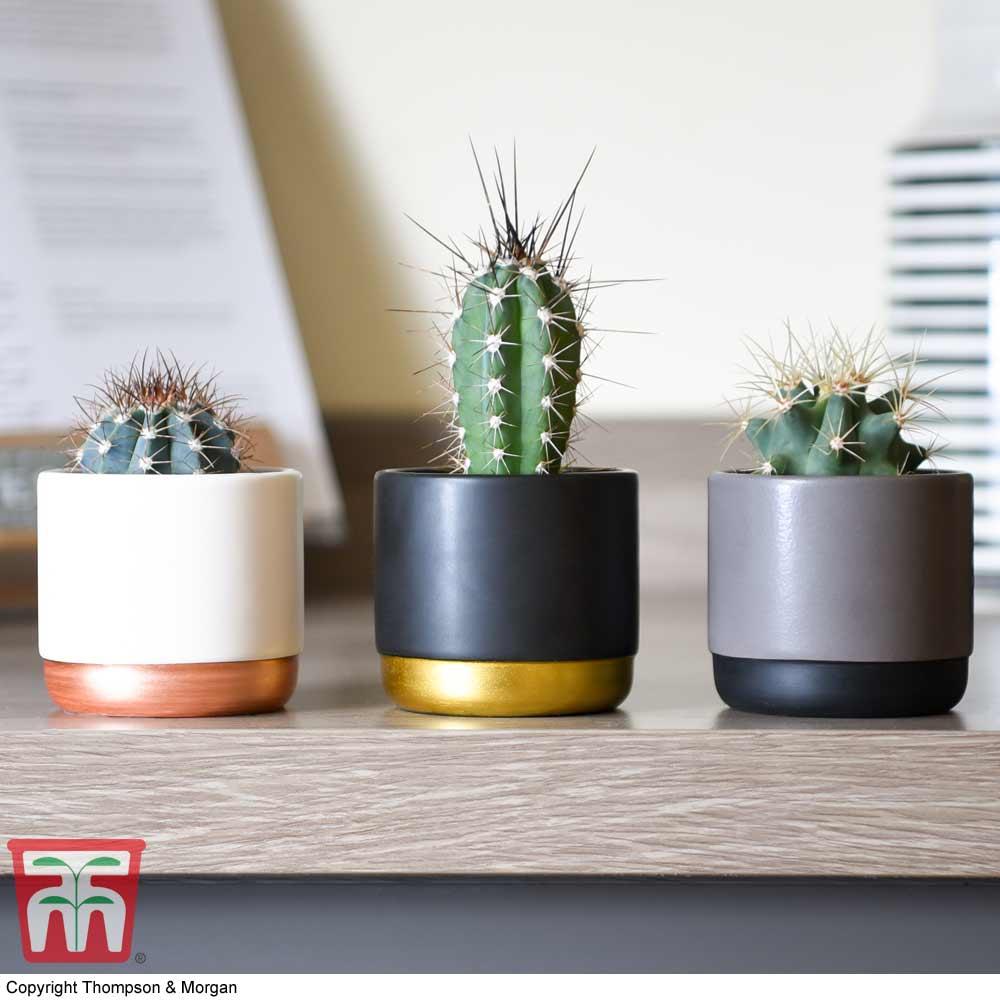 Image of Nurserymans Choice House Plant Mix (House Plant)