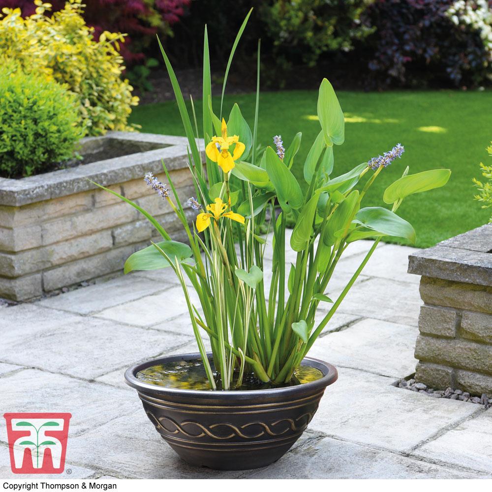 Image of Patio Pond Plant Basket