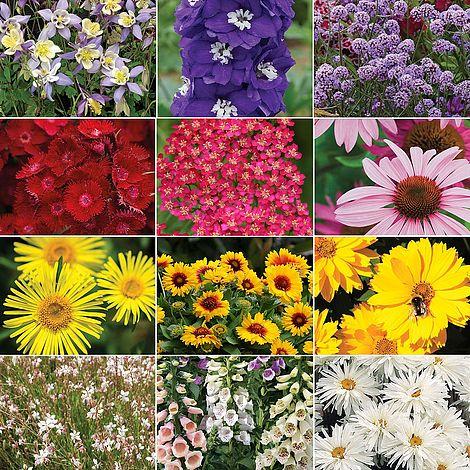Plants & Seeds Nurseryman's Choice Perennial Collection
