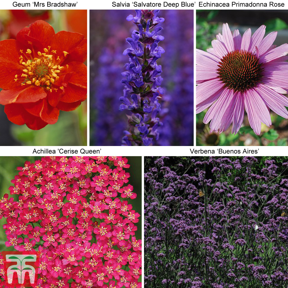 Image of 30 Perfect for Pollinators Perennial Collection