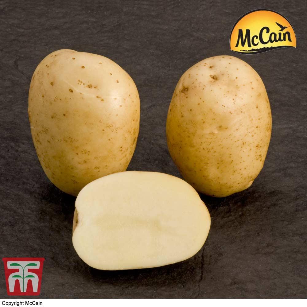 Image of Potato McCain 'Premiere'