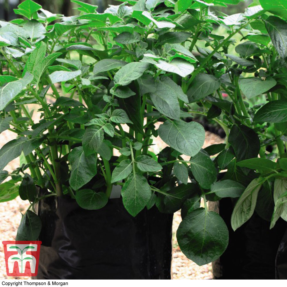 Image of Black/Grey Potato Growing Bags