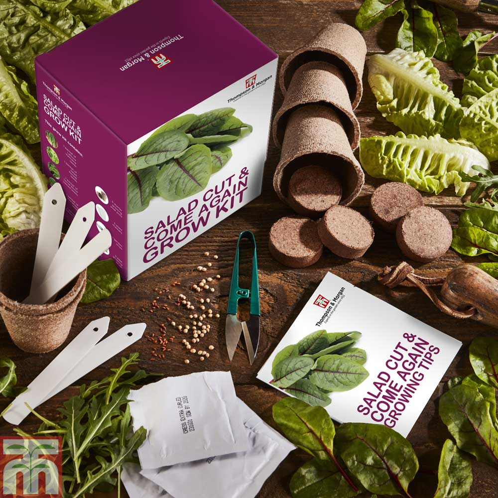 Image of Cut & Come Again Growing Kit