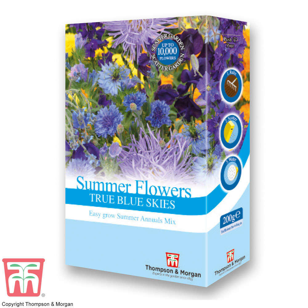Image of Summer Flowers Theme Blue Scatter Pack