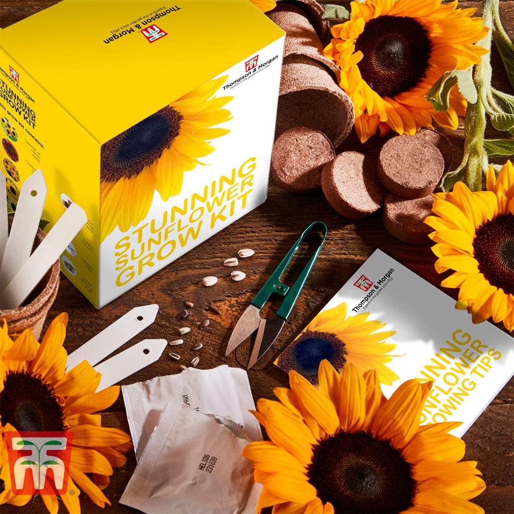 Image of Stunning Sunflowers Growing Kit - Gift
