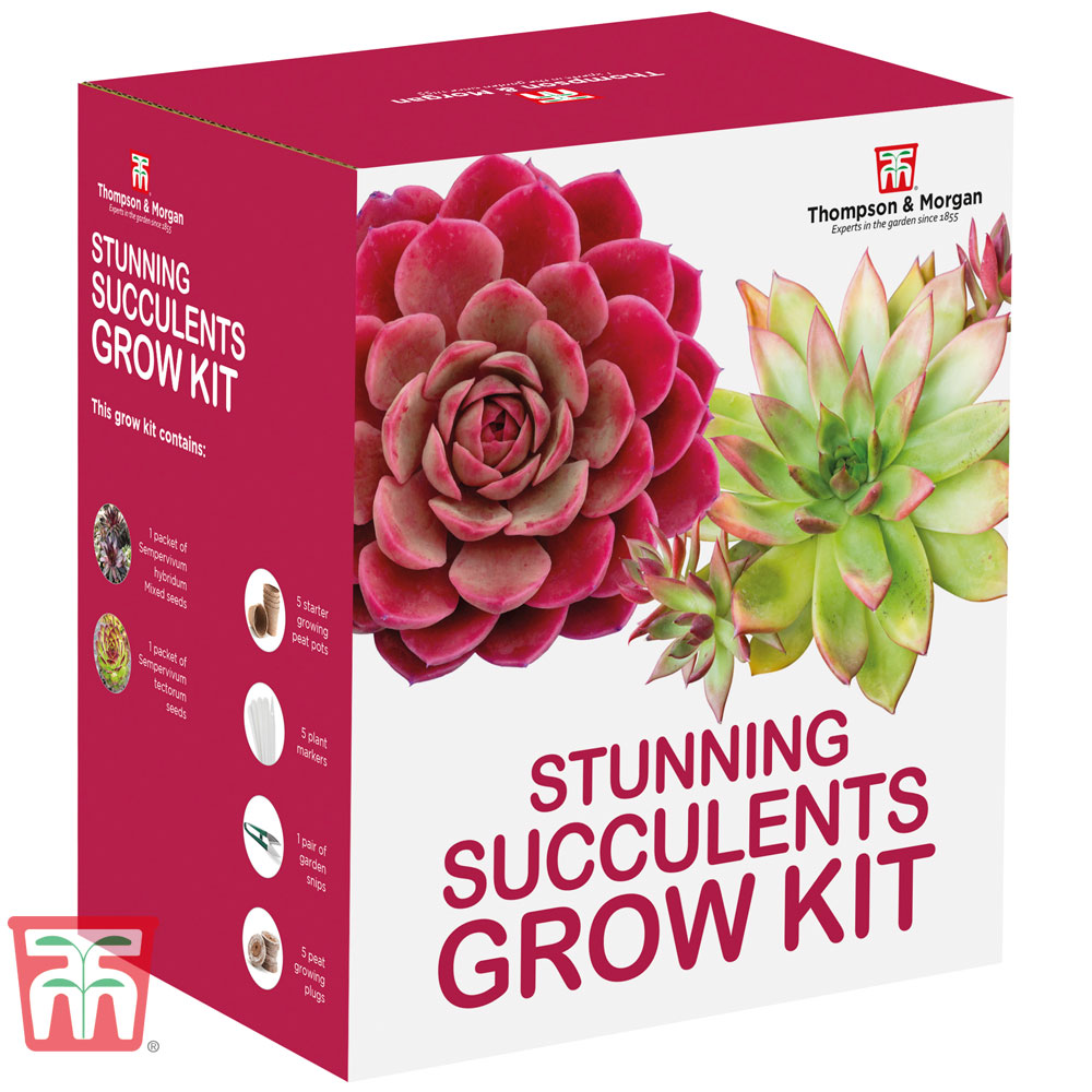 Image of Stunning Succulents Growing Kit - Gift