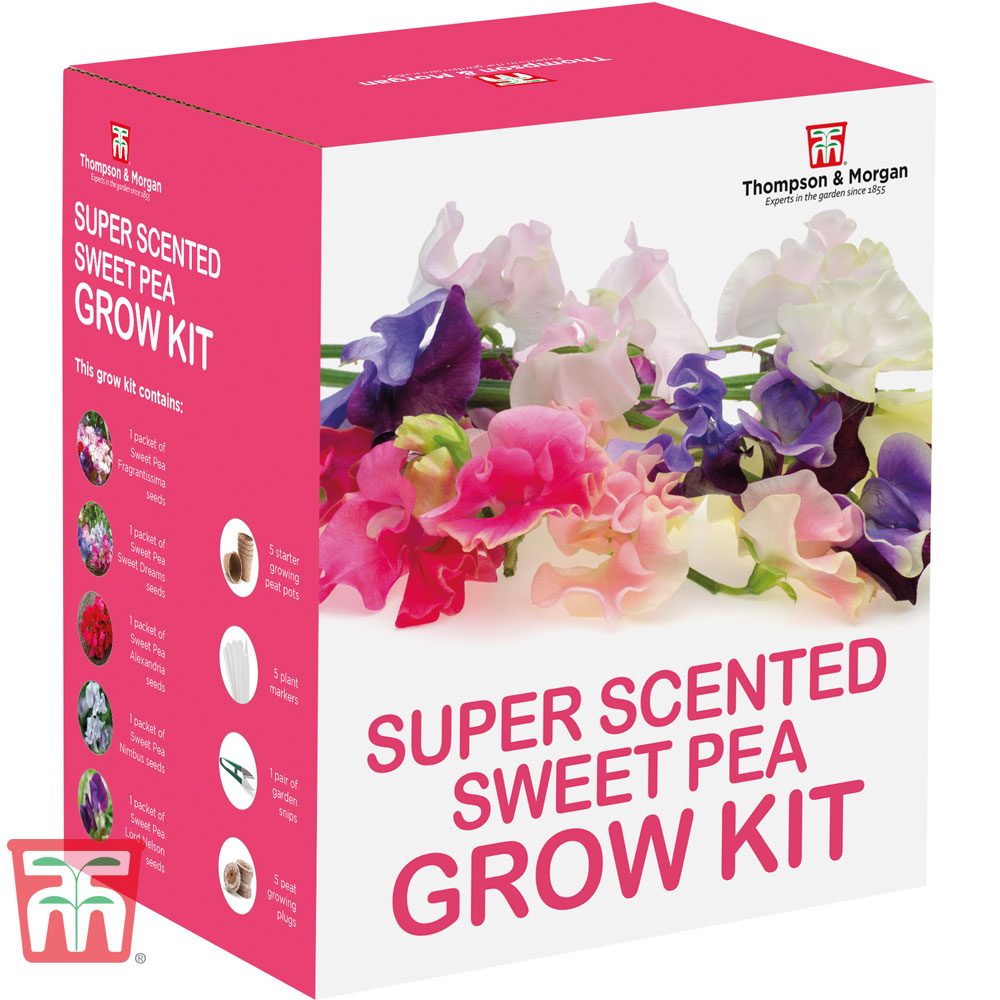 Image of Super Scented Sweet Pea Growing Kit - Gift