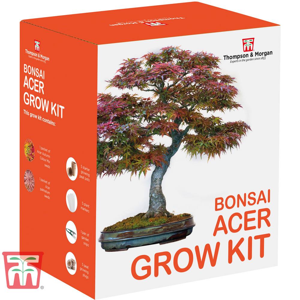 Image of Bonsai Acer Growing Kit - Gift