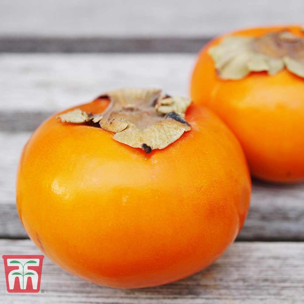 Image of Sharon Fruit 'Fuyu'