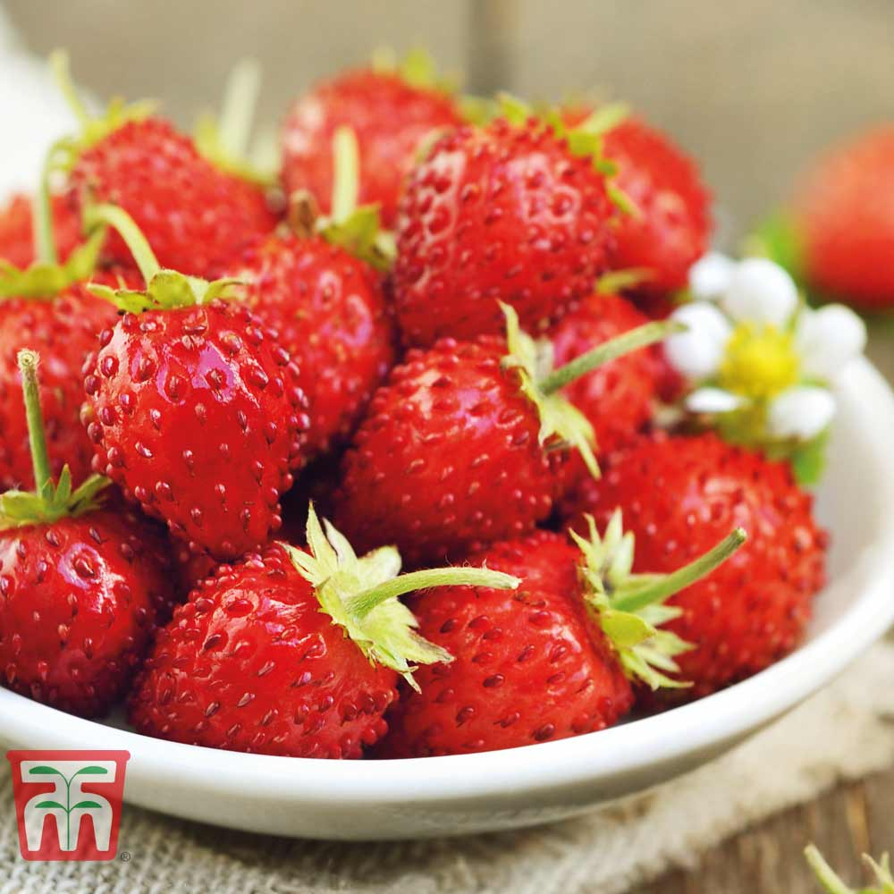Image of Strawberry 'Mignonette'