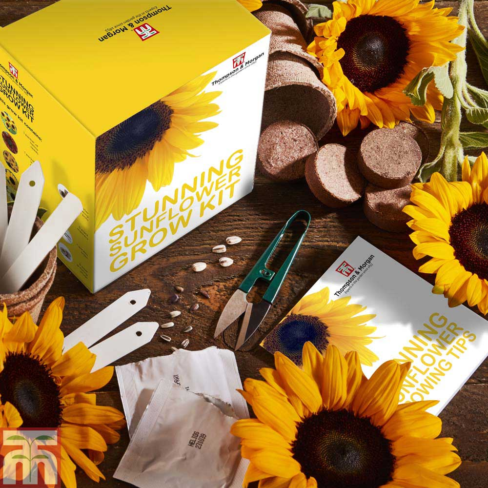 Image of Stunning Sunflower Growing Kit