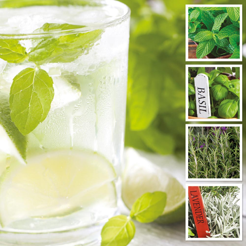 Image of Ultimate Summer Herb Collection