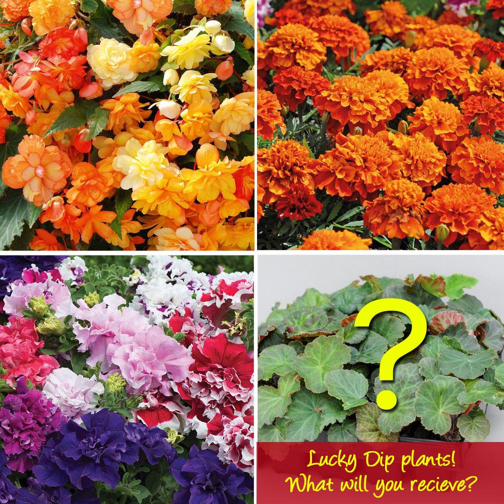 Image of Nurserymans Choice Garden Ready Plants