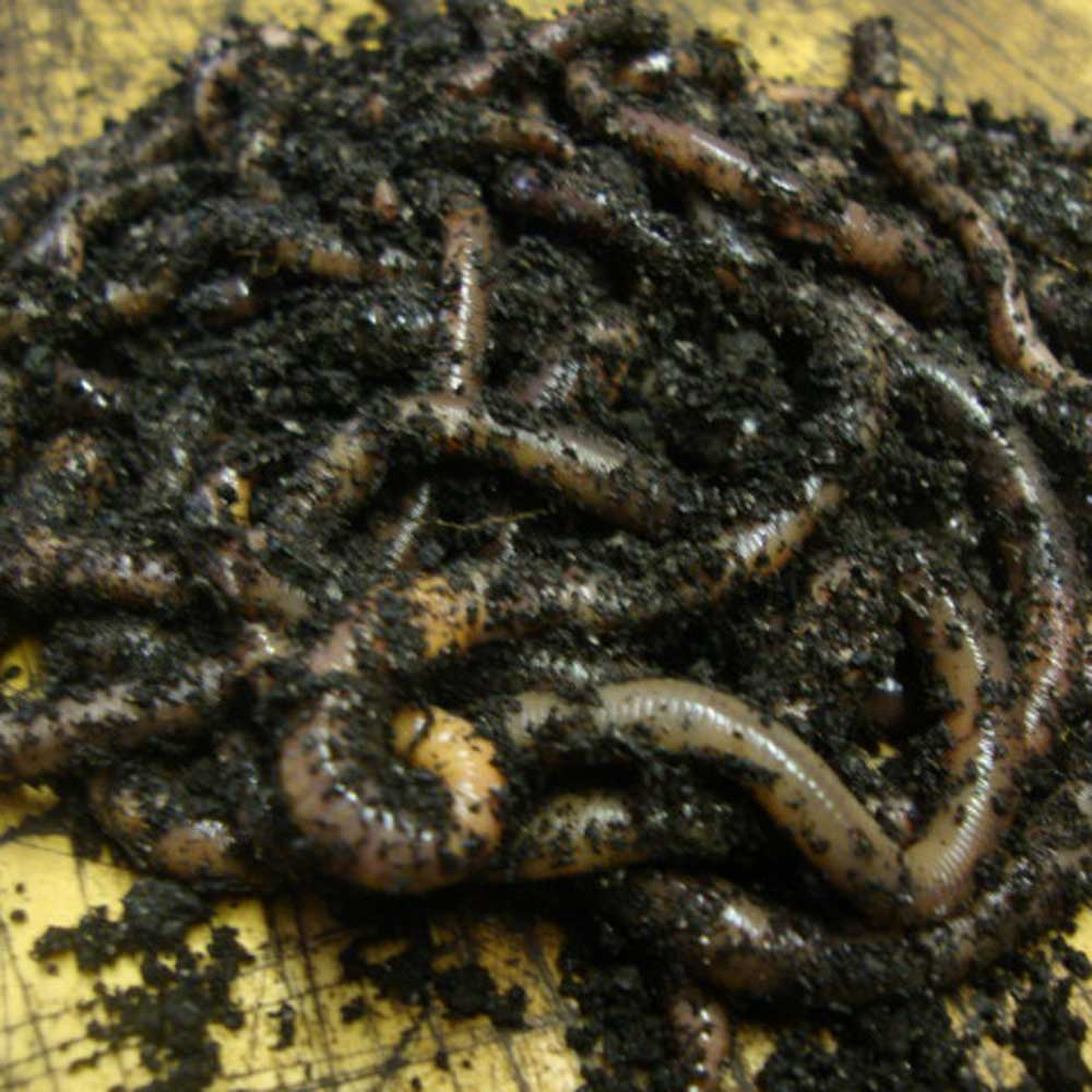 Image of Worm Colony Packs