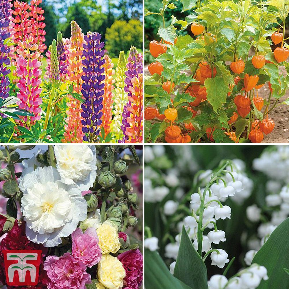 Image of Bare Root Perennial Collection