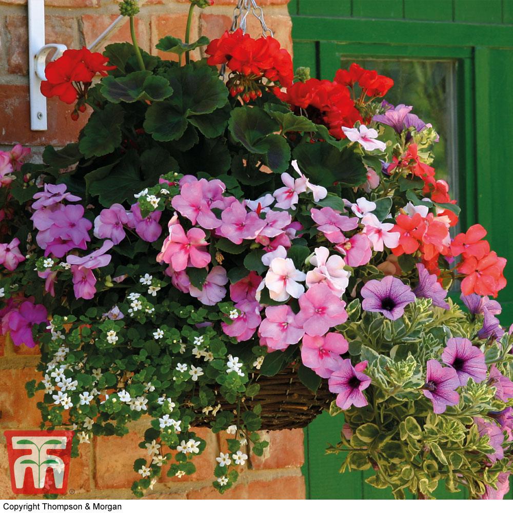 Image of Summer Colour Nurseryman's Choice Hanging Basket Collection