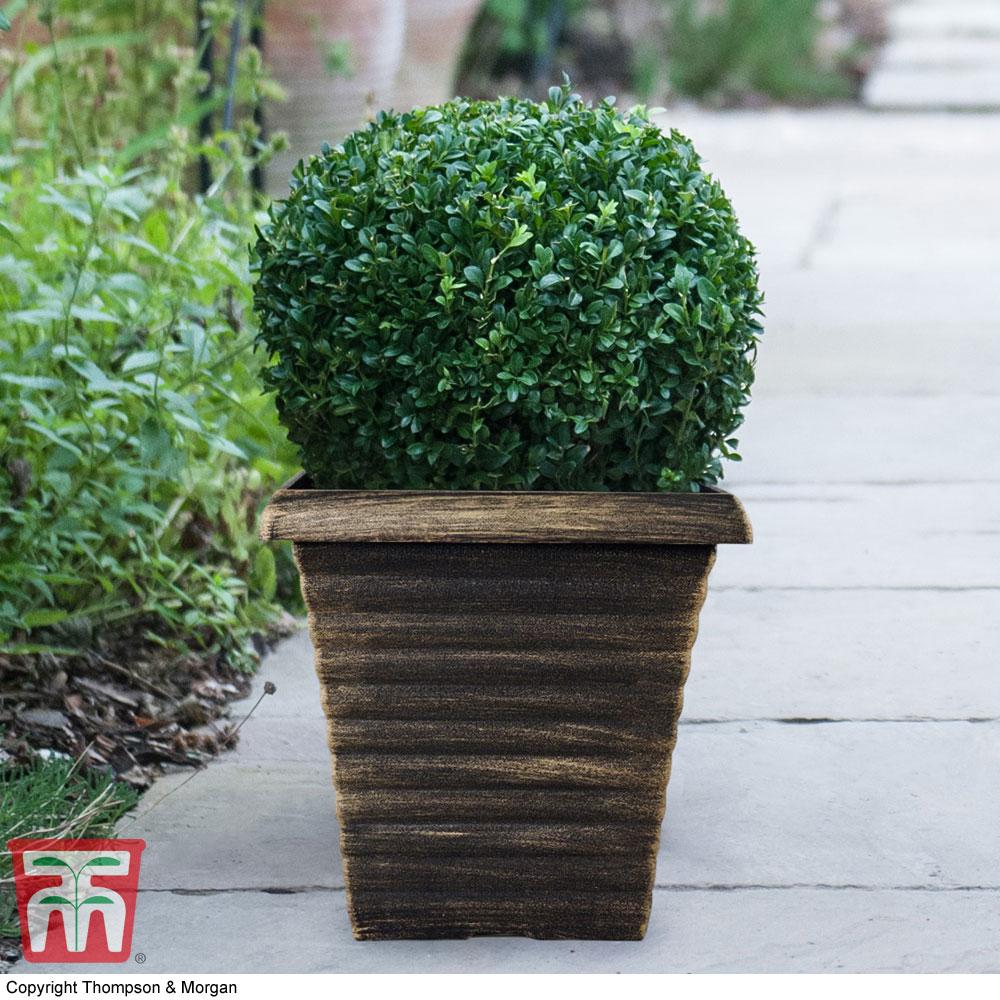 Image of Biscotti Square Patio Pot