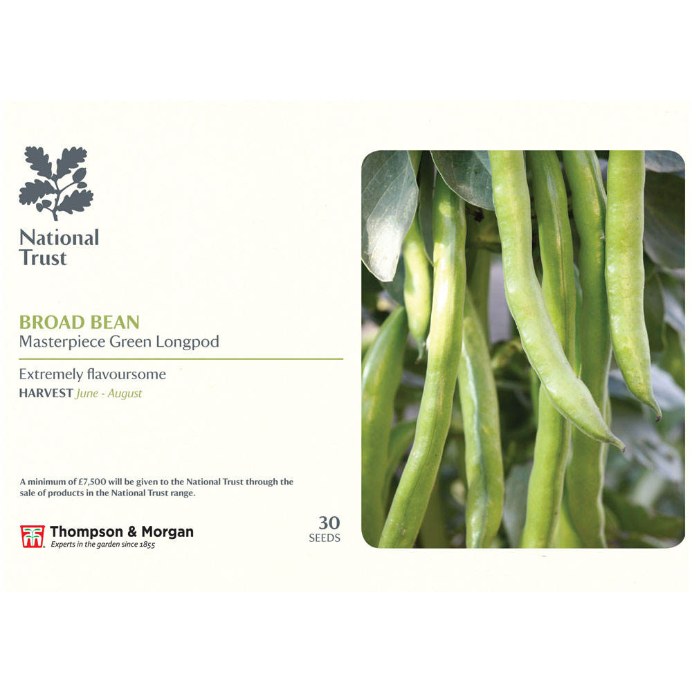 Image of Broad Bean 'Masterpiece Green Longpod' (National Trust)