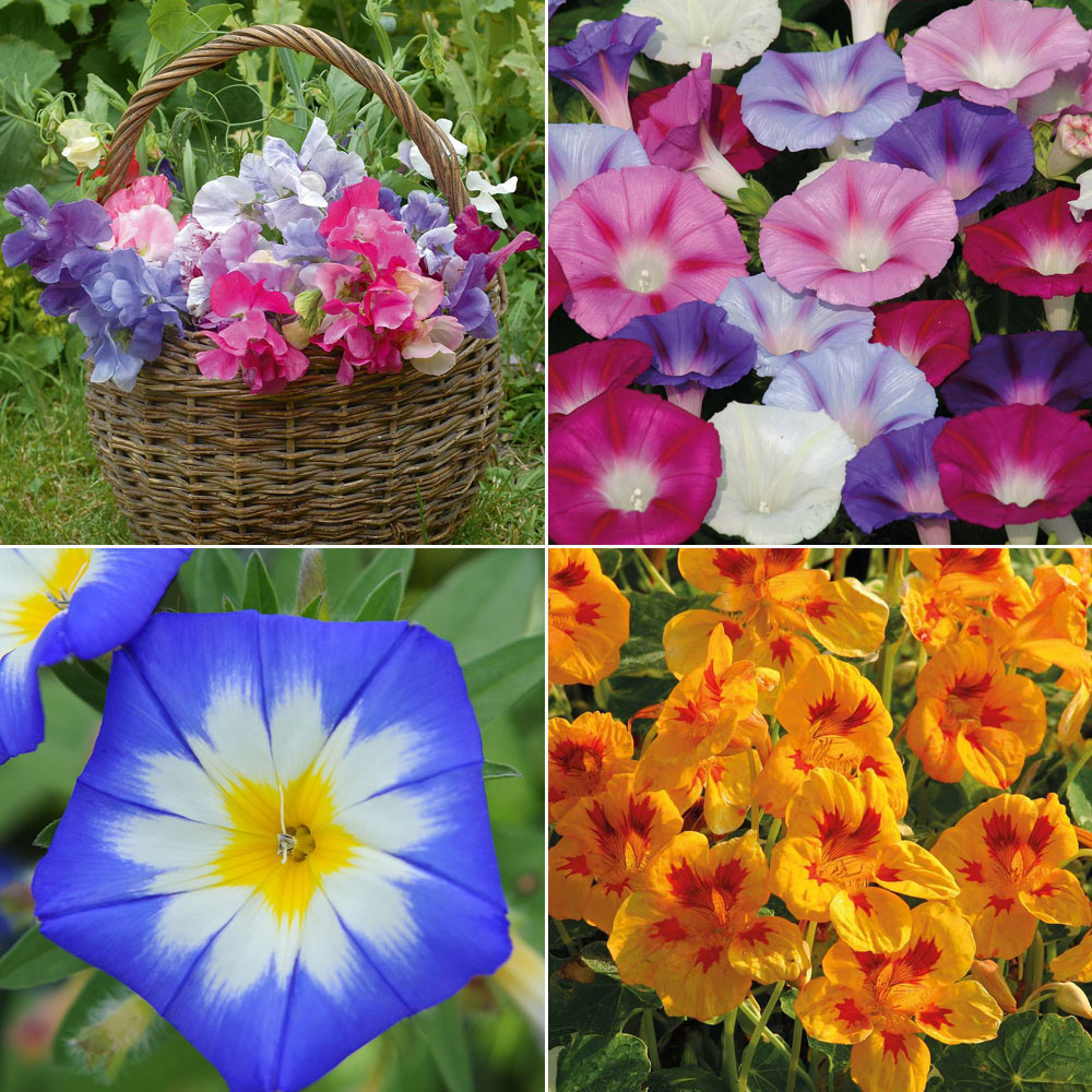 Image of Climbers & Twiners Flower Collection