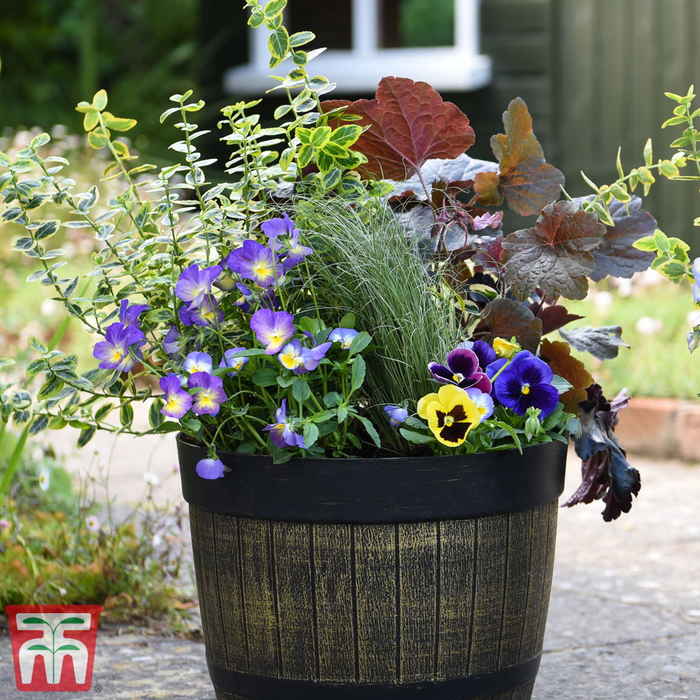 Image of Autumn and Winter Tub Collection