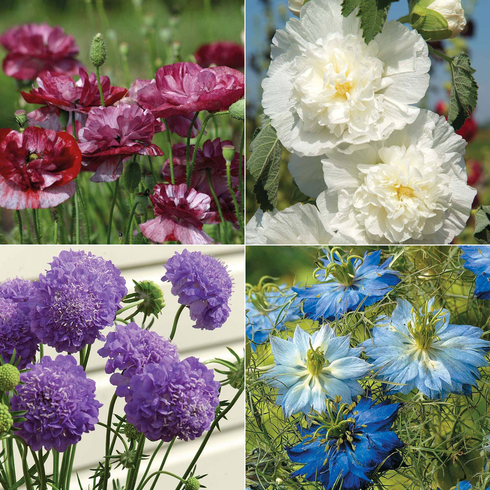 Image of Cottage Garden Favourites Collection