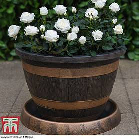 Wooden Barrel Effect Pot & Saucer