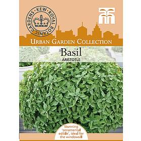 basil aristotle  kew collection seeds