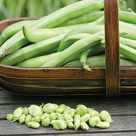 broad bean masterpiece green longpod