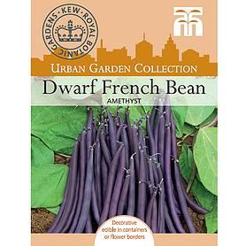 dwarf bean amethyst  kew collection seeds