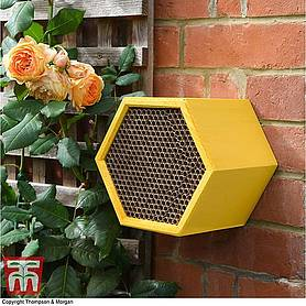 Honeycomb Bee House
