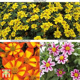 Bidens Collection Mix