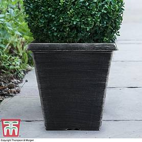 Biscotti Square Patio Pot