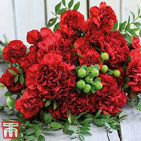 christmas carnations bouquet
