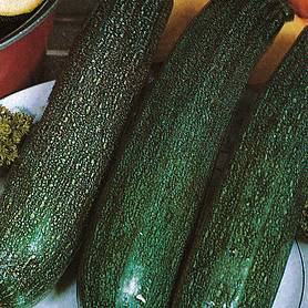 courgette all green bush