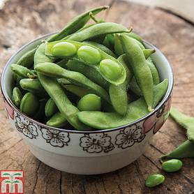 edamame green shell