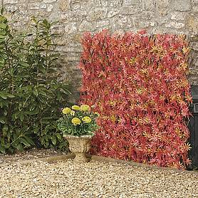 Expandable Artificial Red Acer Hedge Trellis