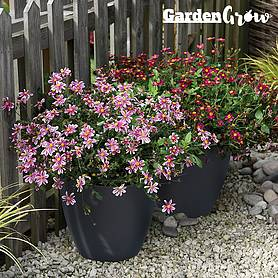 garden grow set of  self watering plant pots large