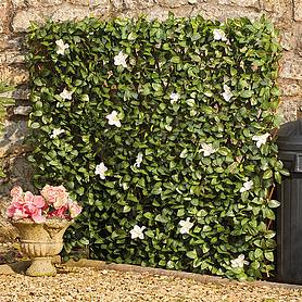 White Flower Hedge Trellis - 1x2m