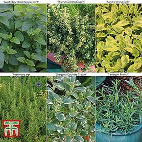 gardeners  cooks herb collection