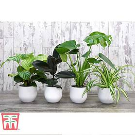 House Plant Urban Jungle Collection