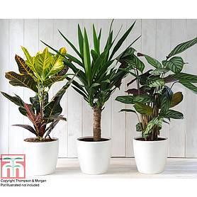 green houseplants trio