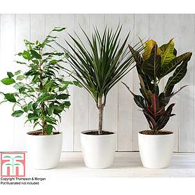 tms choice house plant mix
