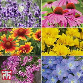 nurserymans choice perennial collection