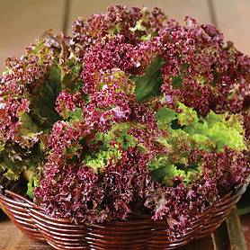 lettuce lollo rossa looseleaf
