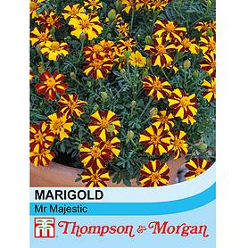 marigold mr majestic