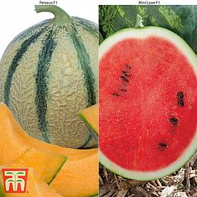 Melon Grafted Duo