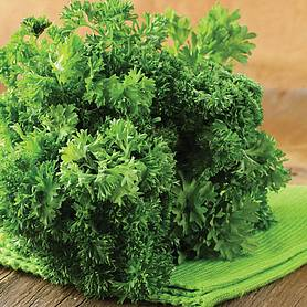 parsley lisette